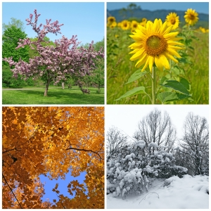 A display of four seasons. Which time is the best time to apply for a job?