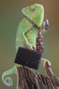 A chameleon wears a suit. Adaptability is another one of several technical transferable skills.
